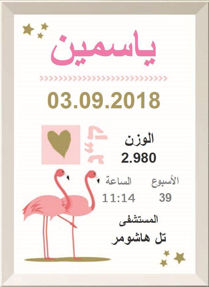 شهادة ميلاد مزخرفة  (תעודות לידה בערבית) - الفلامنجو الوردي (פלמינגו ורוד בערבית)